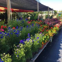Holiday's Nursery & Landscaping Gallery